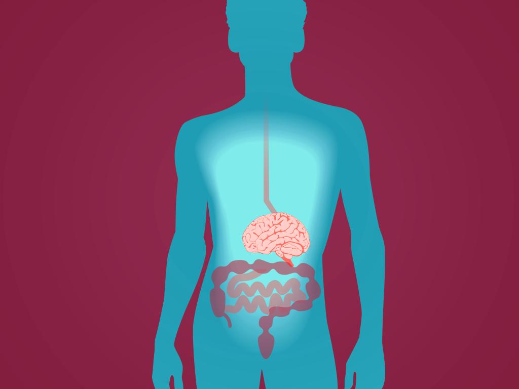 Des neurones dans l'intestin